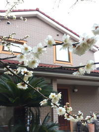 3月3日 - yosshii-kamoHouse