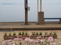 四国・岬巡りの旅30(下灘駅) - たかくねんのゆるゆる〇〇ライフ