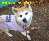 祝♪杏奈ちゃん♪♪ - もももの部屋(家族を待っている保護犬たちと我家の愛犬のブログです)