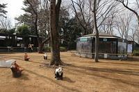 夢見ヶ崎動物公園③ - つれづれ日記