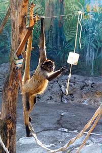 給餌器とジェフロイクモザル - 動物園放浪記