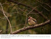 2018.2.25 - 鳥撮り遊び
