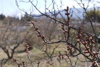 春を見つけに 〜裏山散策〜 - CROSSE 便り