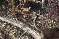 福寿草 - 小さな森のキキとサラ