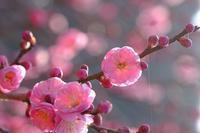 咲き始め - きずなの家