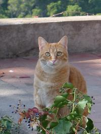 カプリ島には猫がいっぱい3 (Capri 10) - エミリアからの便り