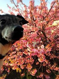 錯覚 - 日本テリア 犬目堂