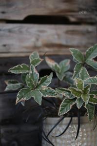 素朴で自然 - CHIROのお庭しごと