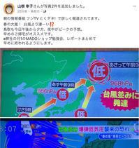 ⭐︎春の大嵐!  台風より凄ーい、危険⁉️😱 - 街かど 「花」 スポット