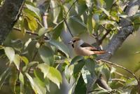最近撮った鳥 - 暮らしの中で