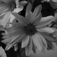 Flower 1 - Visitors