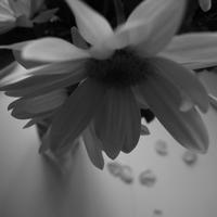 Flower 2 - Visitors