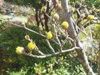 春の嵐と春の庭… - 侘助つれづれ