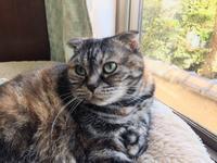 耳折れ猫とチャプチェ - will