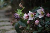 やさしい色 、さくら色 - CHIROのお庭しごと