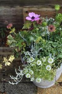 変わり種の寄せ植え - さにべるスタッフblog     -Sunny Day's Garden-