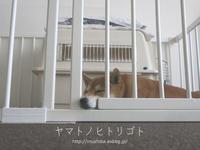 犬部屋拡張しました。 - yamatoのひとりごと
