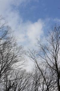 三月の森を歩く。 - 万願寺通信