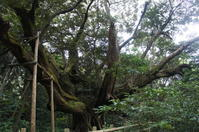 NatureServise三宅島&御蔵島&青ヶ島取材の旅2日目その2 - chou*chou