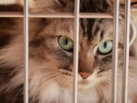 猫の森グループからのお知らせ - ご機嫌元氣 猫の森公式ブログ