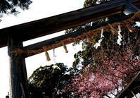 早い桜を求めて。 - A DAY IN THE LIFE/猫屋敷の日常