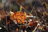 枯葉が歌うよ - 風の彩り-2