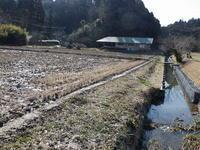 卵塊増える。タンポポ、オオイヌノフグリ、フラサバソウ - 千葉県いすみ環境と文化のさとセンター