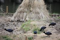 今日の鳥さん180301 - 万願寺通信