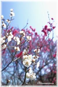春告草・・・English Lesson 3.2 - 日々楽しく ♪mon bonheur