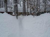 大雪です!中札内に来て11年、過去最高の積雪量になりました。 - 十勝・中札内村「森の中の日記」~café&宿カンタベリー~
