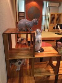 猫カフェ体験 - たにみち日記*平凡すぎる日々のこと*