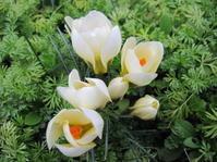 春が来た♪~ - 花の自由旋律