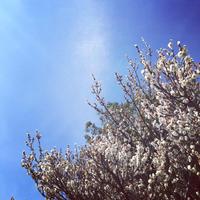 *本日3/3は〜 - salon de thé okashinaohana 可笑的花