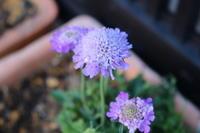 春の花 - 空色のココロ~小さな幸せを探して~