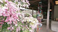 春色の北鎌倉 - 黒猫屋のにくきゅう
