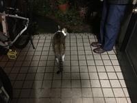 チコの作法 - COMPLEX CAT