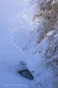 早朝散歩で宝探し - ekkoの --- four seasons --- 北海道