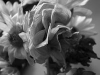 Flower 4 - Visitors