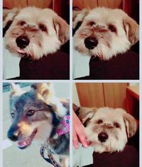 犬日和の日 - 犬との穏やかな日々