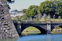 東京でバードウオッチングだヨおっ母さん!・・・皇居 - 浅川野鳥散歩