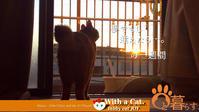 猫と暮らす とら猫JOYのもふもふ日記 - The SKY - Timelapse. :: 猫と暮らす(ΦωΦ)