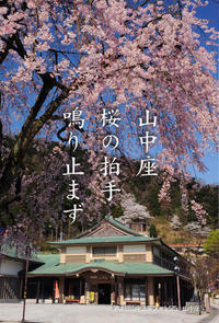 大雪が山中温泉の桜にも影響しそうです - 酎ハイとわたし