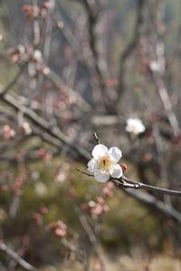 『うぐちゃんと梅を見に裏山へ』&『快晴の日の午後』 - CROSSE 便り