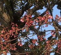 長命寺の桜餅 - 好きなものに囲まれて2