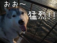暴風の日、噴火の日!(^_^;) - 犬連れへんろ*二人と一匹のはなし*