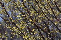 春を感じてⅣ - 旅のかほり