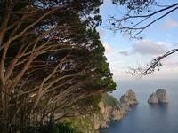 風で斜めになった木 (Capri 14) - エミリアからの便り