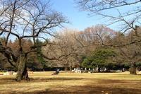 春模様 光が丘公園 - お散歩写真     O-edo line