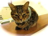 小鉄にぴったりだ。 - 世帯主は猫なんです。