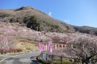 高麗山→湘南平 & 吾妻山その6 - 季節(いま)を求めて
